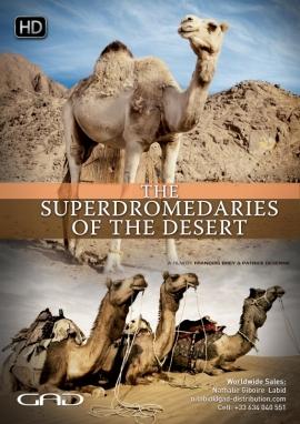 Affiche de Les Superdromadaires du désert