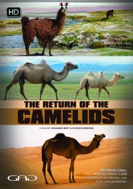 Affiche de Le retour des camélidés