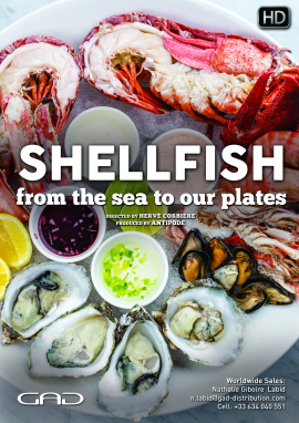 Shellfish, from the sea to our plates