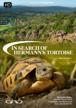 Poster of In search of Hermann's tortoise