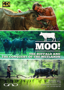 Poster of The buffalo and the conquest of the wetlands ( Bali, Thailand, India, Brazil, Egypt)
